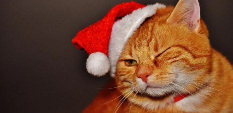 cat wearing santa hat